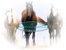 cavallo_09