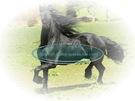 cavallo_10