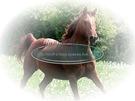 cavallo_11