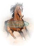 cavallo_12